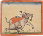 A man on an elephant