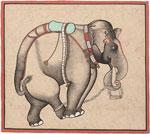 Untitled, Elephant